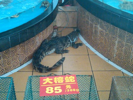 China_Croc